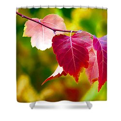 The Little Things That Bring So Much Joy Shower Curtain by James Steele