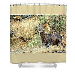 The Loner II Shower Curtain
