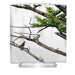The Lone Osprey Shower Curtain