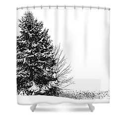 The Lone Pine Shower Curtain