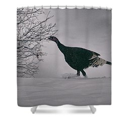 The Lone Turkey Shower Curtain by Jason Coward
