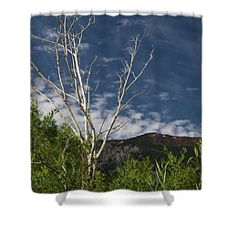 The Lonely Aspen  Shower Curtain