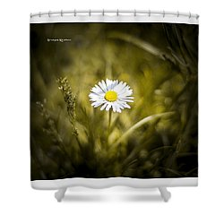 Shower Curtain featuring the photograph The Lonely Daisy by Stwayne Keubrick