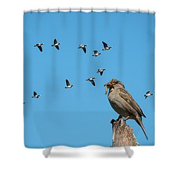The Lonely Sparrow Shower Curtain