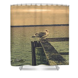 Shower Curtain featuring the photograph The Loner by Melissa Messick