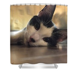 Shower Curtain featuring the photograph The Look by Shelli Fitzpatrick