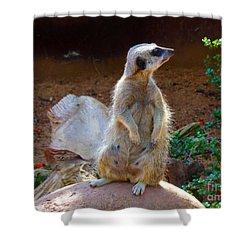 The Lookout - Meerkat Shower Curtain