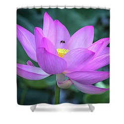 Shower Curtain featuring the photograph The Lotus And The Bee by Cindy Lark Hartman