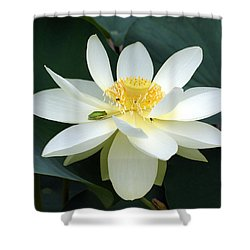 The Lotus Flower The Frog And The Bee Shower Curtain by Gary Crockett