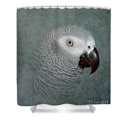 The Love Of A Gray Shower Curtain