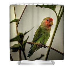 The Lovebird  Shower Curtain