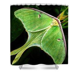 The Luna Moth Shower Curtain