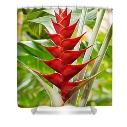 The Macaw Flower  Shower Curtain