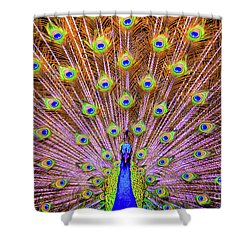 The Majestic Peacock Shower Curtain