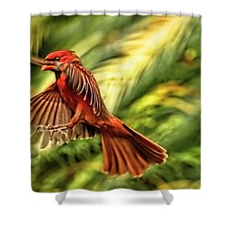 The Male Cardinal Approaches Shower Curtain