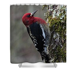 The Maple Sap Tapper Shower Curtain by I'ina Van Lawick
