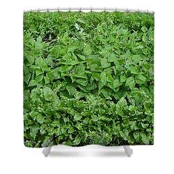 The Market Garden Landscape Shower Curtain