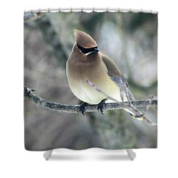 The Masked Cedar Waxwing Shower Curtain