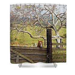 The Maui Daze Shower Curtain