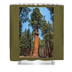 The Mckinley Giant Sequoia Tree Sequoia National Park Shower Curtain