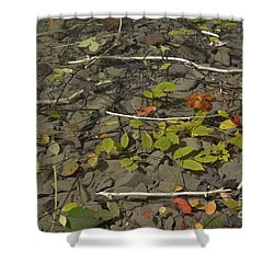 The Menu Shower Curtain by Randy Bodkins