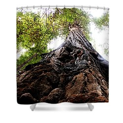 The Mighty Redwood Shower Curtain