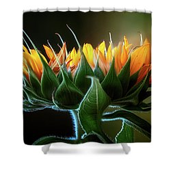 The Mighty Sunflower Shower Curtain
