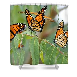 The Migration Of The Monarchs Shower Curtain