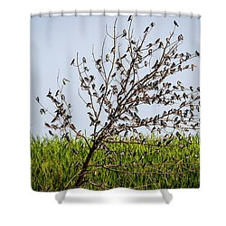 Shower Curtain featuring the photograph The More The Merrier- Tree Swallows  by Ricky L Jones