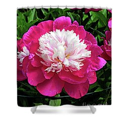 The Most Beautiful Peony Shower Curtain