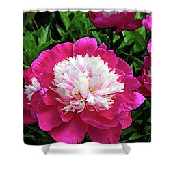 The Most Beautiful Peony Shower Curtain by Eva Kaufman
