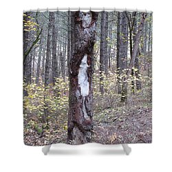 Shower Curtain featuring the photograph The Mouse Ran Up The  by Marie Neder