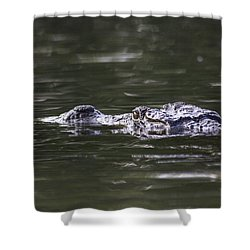 Shower Curtain featuring the photograph The Mugger by Ramabhadran Thirupattur