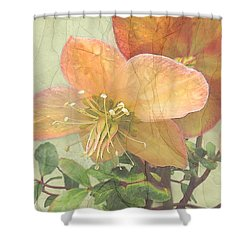 The Mystical Energy Of Nature Shower Curtain