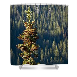 The Next Generation Shower Curtain by Albert Seger