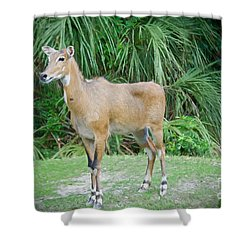 Shower Curtain featuring the painting The Nilgai by Judy Kay