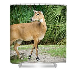 Shower Curtain featuring the painting The Nilgai Pose by Judy Kay