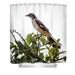 The Northern Mockingbird Shower Curtain