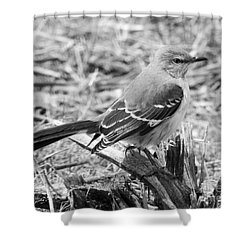 Shower Curtain featuring the photograph The Observer by Anita Oakley