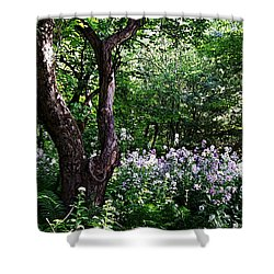 The Old Apple Tree, Fiddlehead Ferns And Wild Phlox Shower Curtain