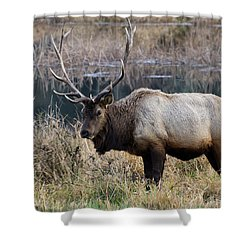 The Old Bull Shower Curtain