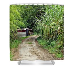 The Old Forest Road Shower Curtain by Yali Shi