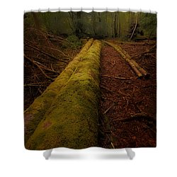 The Old Mossy Trunk Shower Curtain
