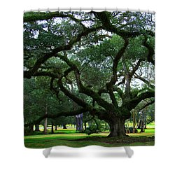 The Old Oak Shower Curtain by Perry Webster