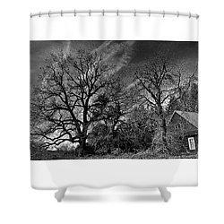 The Old Oak Tree Shower Curtain