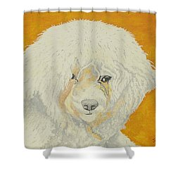 The Old Poodle Shower Curtain
