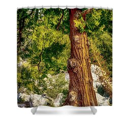 The Old Rugged Tree Shower Curtain by Joseph Hollingsworth