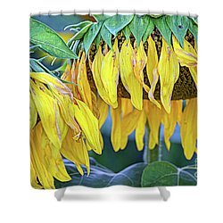 The Old Sunflowers Shower Curtain