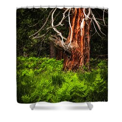 The Old Tree Shower Curtain