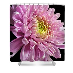 The One And Only Dahlia  Shower Curtain